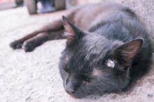 Black Adult Stray Cat Lying At...