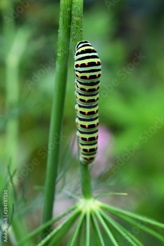 Fotomural green caterpillar