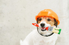 Dog As Funny House Painter With Paintbrush Against Concrete Wall