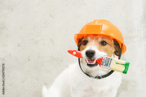 Fotografía  Dog as funny house painter with paintbrush against concrete wall
