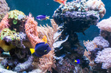 Fototapeta Do akwarium - Rafa koralowa | Coral reef