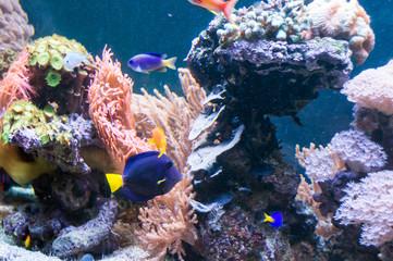 Rafa koralowa | Coral reef