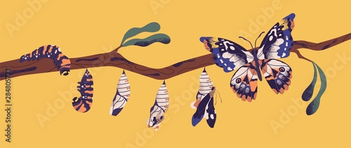 Canvas Print Butterfly life cycle - caterpillar, larva, pupa, imago eclosion