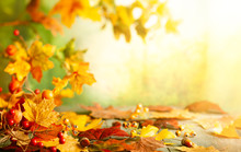 Thanksgiving Or Autumn Scene With Leaves And Berries On Wooden Table.  Autumn Background With Falling Leaves.