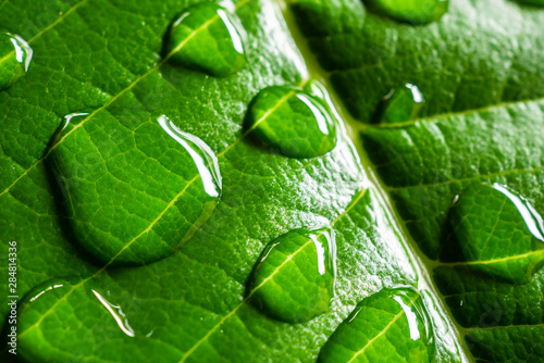 Canvas Prints Macro photography waterdrop on green leafs