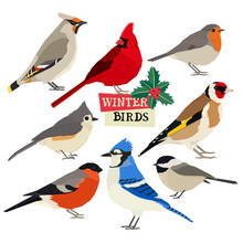 Winter Birds Vector Illustration Christmas Holly Trees Isolated Objects