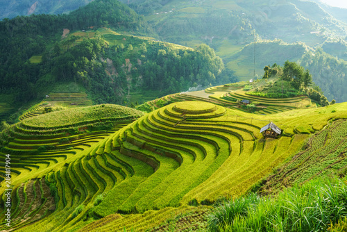 Fototapeta Terraced rice field in harvest season in Mu Cang Chai, Vietnam. Mam Xoi popular travel destination. obraz