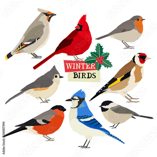 Photo Winter birds Vector illustration Christmas holly trees Isolated objects