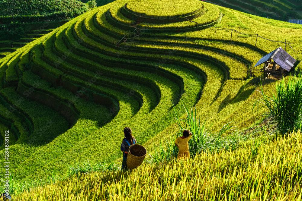 Fototapety, obrazy: Terraced rice field in harvest season in Mu Cang Chai, Vietnam. Mam Xoi popular travel destination.