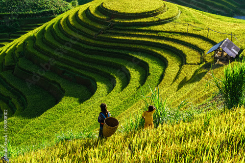 Autocollant pour porte Les champs de riz Terraced rice field in harvest season in Mu Cang Chai, Vietnam. Mam Xoi popular travel destination.