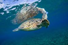 Marine Life, Liuqiu Island, Ta...