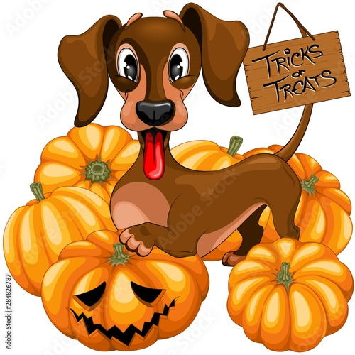 Aluminium Prints Draw Halloween Dachshund Tricks or Treats Cute Cartoon Character Vector Illustration