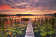 Beautiful sunrise over lake covered with water lily