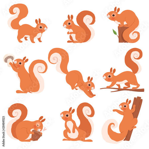 Photo  Cartoon squirrel