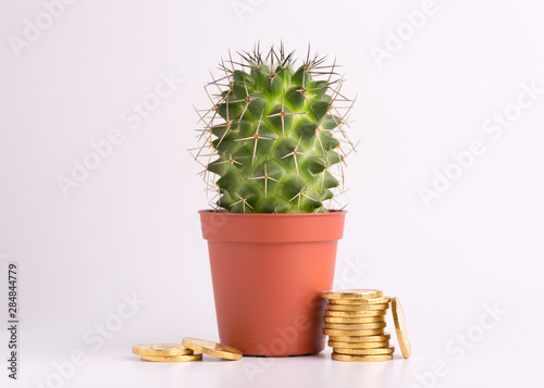 Gold coins and a small green cactus. Cactus in a pot and gold coins on a white background.