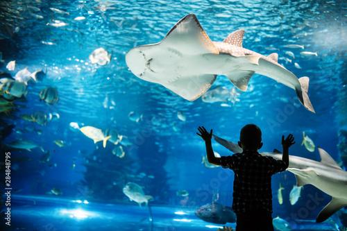 Photo Little boy watching fishes in aquarium