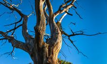 Dry Tree Against Blue Sky