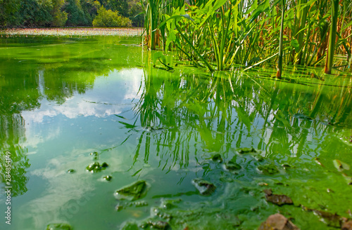 Stampa su Tela Water landscape with blue-green algae surface