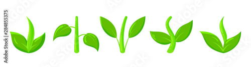 Valokuva  sprout plant green grass simple flat vector icon
