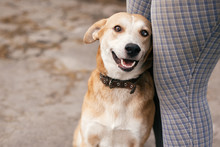 Cute Homeless Dog With Sweet L...