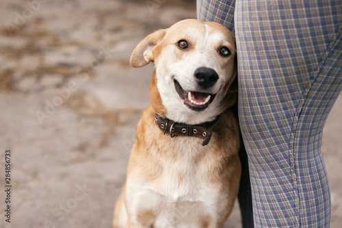 Foto  Cute homeless dog with sweet looking eyes sitting at people legs and smiling in summer park