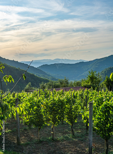 Beautiful vineyard and mountains, sunset, panoramic background. Tuscany, Lunigiana, Italy, Europe