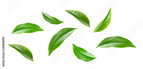 Carta da parati  Green tea leaf collection isolated on white background