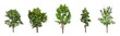 Leinwanddruck Bild - isolated tree Collection on White Backdrop