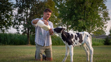 Authentic Shot Of Young Farmer Is Feeding From The Bottle With Dummy An Ecologically Grown Newborn Calf Used For Biological Milk Products Industry On A Green Lawn Of A Countryside Farm With A Sunshine