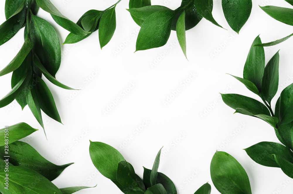 Fototapeta Green twigs top view frame with text space. Decorative plant branches, greenery border. Fresh leaves with dew drops on white background. Exotic foliage, tropical, rainforest plant backdrop