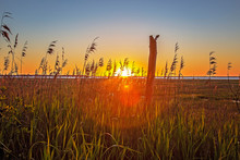 Sunrise Peeking Through Grasses