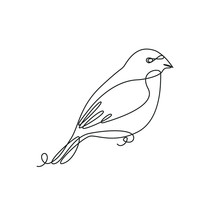 Bullfinch One Line Drawing On ...