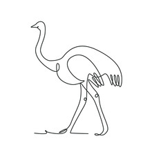 Ostrich One Line Drawing On White Isolated Background. Vector Illustration