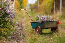 Wheelbarrow With Flowers In The Garden At The Village. Autumn Rural Still Life