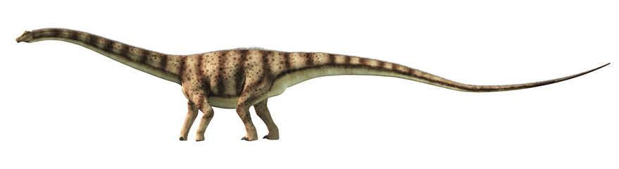 Diplodocus was a sauropod dinosaur that lived in North America during the late Jurassic. Here is is pictured on a white background. 3D Rendering.