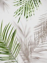 Tropical Palm Green Leaves On ...