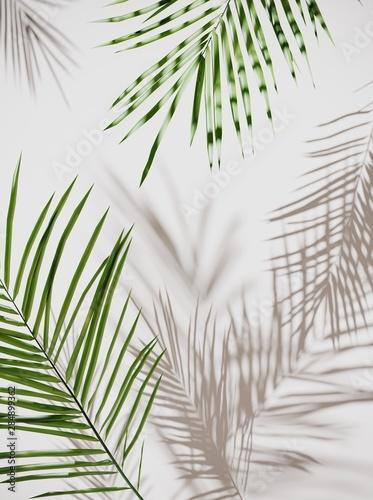liscie-tropikalnej-palmy-zielone
