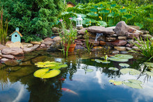 Colorful Koi Carps Swim In A S...
