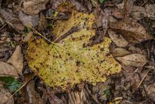 Decaying Wet Leaf