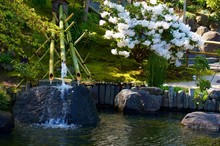 Bamboo Water Moss Feature In J...