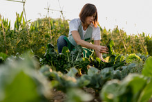 Woman Working In Her Vegetable...