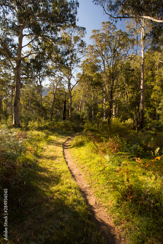 Delatite River Trail at Mt Buller Canvas-taulu