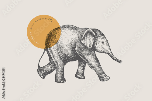 Valokuva An image of a little Asian baby elephant drawn by graphic lines on a light isolated background
