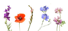 Beautiful Wild Flowers Isolated On White Background.
