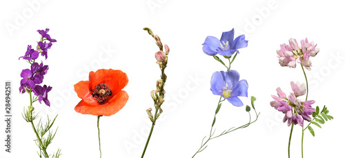 Beautiful wild flowers isolated on white background. - 284942511