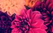 Leinwandbild Motiv Colorful flowers arrangement card background