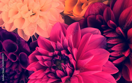 Deurstickers Dahlia Colorful flowers arrangement card background