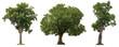 Leinwanddruck Bild - Isolated of three trees on white background.