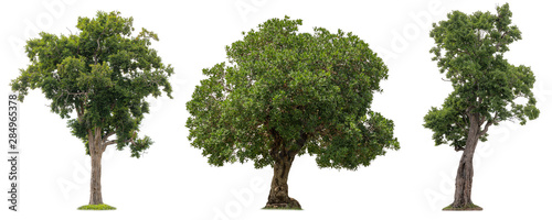 Αφίσα  Isolated of three trees on white background.