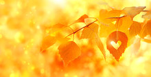 Beautiful Autumn Yellow Birch Leaves. Autumn Landscape Background. Fall Abstract Background With Golden Birch. Autumnal Nature Forest Backdrop For Design. Shallow Depth, Soft Selective Focus